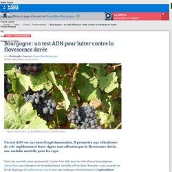 FRANCE BLEU 04/11/14 Bourgogne : un test ADN pour lutter contre la flavescence dorée