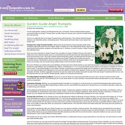 K. Van Bourgondien & Sons - High Quality Dutch Flowerbulbs and Perennials at Wholesale Prices