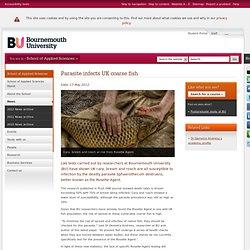 Bournemouth university international strategy
