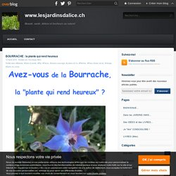 BOURRACHE : la plante qui rend heureux - www.lesjardinsdalice.ch