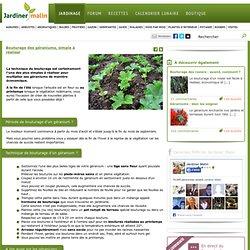 Bouturage geranium : technique et période