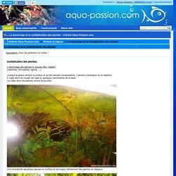 Le bouturage et la multiplication des plantes - Articles Aqua-Passion.com