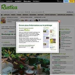 Bouturage de vivace, plante et arbuste