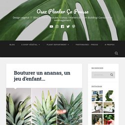 Bouturer un ananas, un jeu d'enfant… – Osez Planter Ça Pousse