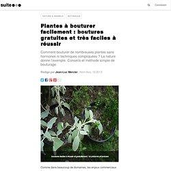 Plantes à bouturer facilement : boutures très faciles à réussir