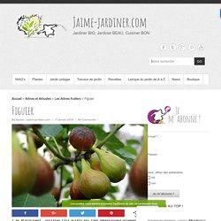 Figuier : Planter, bouturer, marcotter, récolter, soigner, avec jaime-jardiner