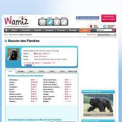 Bouvier des Flandres : chien et chiot. Flanders Cattle Dog, Vlamse Koehond