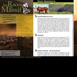 Race bovine Abondance : vaches laitières des alpes en haute-savoie