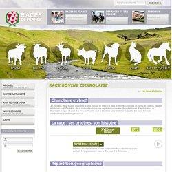 Race Bovine Charolaise - Races de France