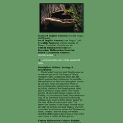 Bracket Fungus: Detailed