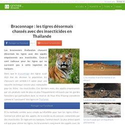 Braconnage : les tigres désormais chassés avec des insecticides en Thaïlande