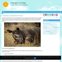 Le braconnage : une menace pour le tourisme - Voyage Le Mag