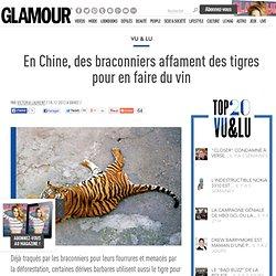En Chine, des braconniers affament des tigres pour en faire du vin