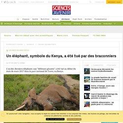 Un éléphant, symbole du Kenya, a été tué par des braconniers - Sciencesetavenir.fr