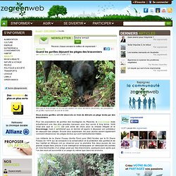 Quand les gorilles déjouent les pièges des braconniers