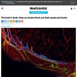 The brain's drain: How our brains flush out their waste and toxins