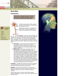 Brain Explorer - Brain Atlas - Introduction