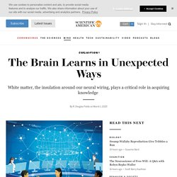 The Brain Learns in Unexpected Ways