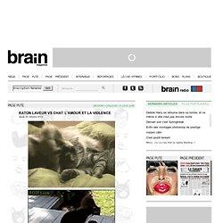 Raton laveur vs chat: l'amour et la violence