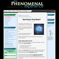 How Fast is Your Brain? | The Phenomenal Experience