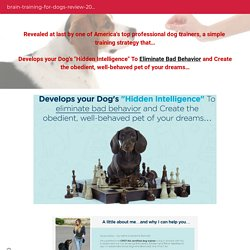 Dog Training Collar Will Help To Improve Dog Behavior