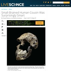 Small-Brained Human Cousin Was Surprisingly Smart