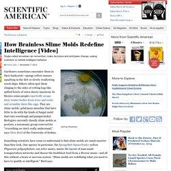How Brainless Slime Molds Redefine Intelligence [Video]