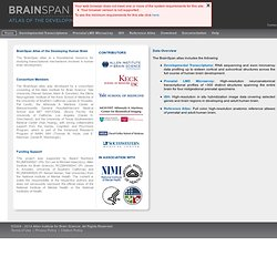Home :: BrainSpan: Atlas of the Developing Human Brain