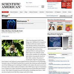Brainwaves, Scientific American Blog Network