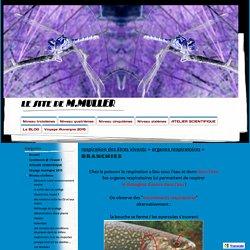BRANCHIES - le site de M.MULLER