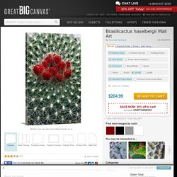 Brasilicactus haselbergii Photo Canvas Print