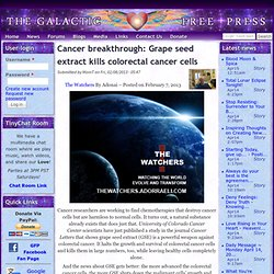 Cancer breakthrough: Grape seed extract kills colorectal cancer cells