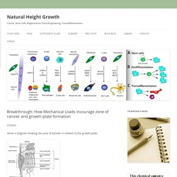 Breakthrough: How Mechanical Loads incourage zone of ranvier and growth plate formation - Natural Height Growth