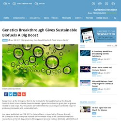 Genetics Breakthrough Gives Sustainable Biofuels A Big Boost