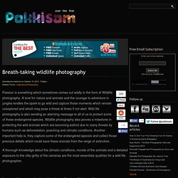 Breath-taking wildlife photography | Pokkisam blog