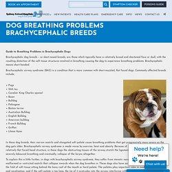 Dog heavy breathing in Sydney