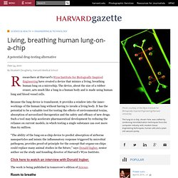 Living, breathing human lung-on-a-chip