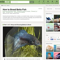 how to breed betta fish in tamil