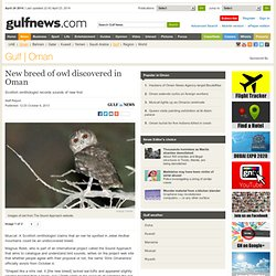 New breed of owl discovered in Oman