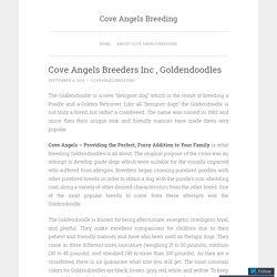 Cove Angels Breeders Inc , Goldendoodles