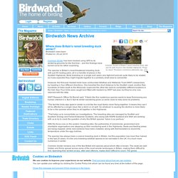 Where does Britain's rarest breeding duck winter?