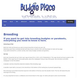 Breeding - Budgie Place
