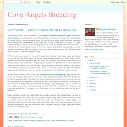 Cove Angels Breeding: Cove Angels – Things to Consider Before Getting a Dog