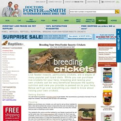 Breeding Your Own Feeder Insects: Crickets for Reptiles