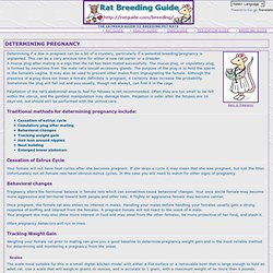 Breeding Guide: Determining Pregnancy
