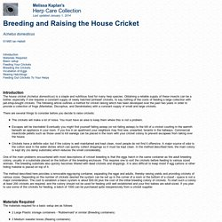Breeding and Raising the House Cricket