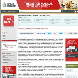 Breeding and Reproduction of Rabbits: Rabbits: The Merck Manual for Pet Health