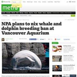 NPA plans to nix whale and dolphin breeding ban at Vancouver Aquarium