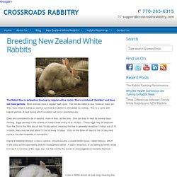 Breeding New Zealand White Rabbits