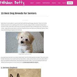15 Best Dog Breeds for Seniors – Fabulous Betty